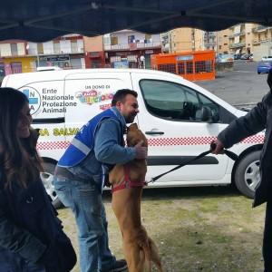 Campagna contro il randagismo: nel villaggio Sant'Agata zona B microchippati 52 cani